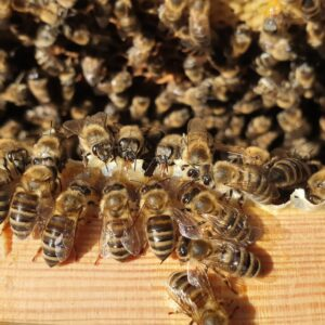 Staincross Apiaries Local Bees