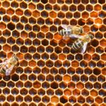 Pollen frame