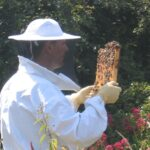 Summer Inspection at Staincross Apiaries